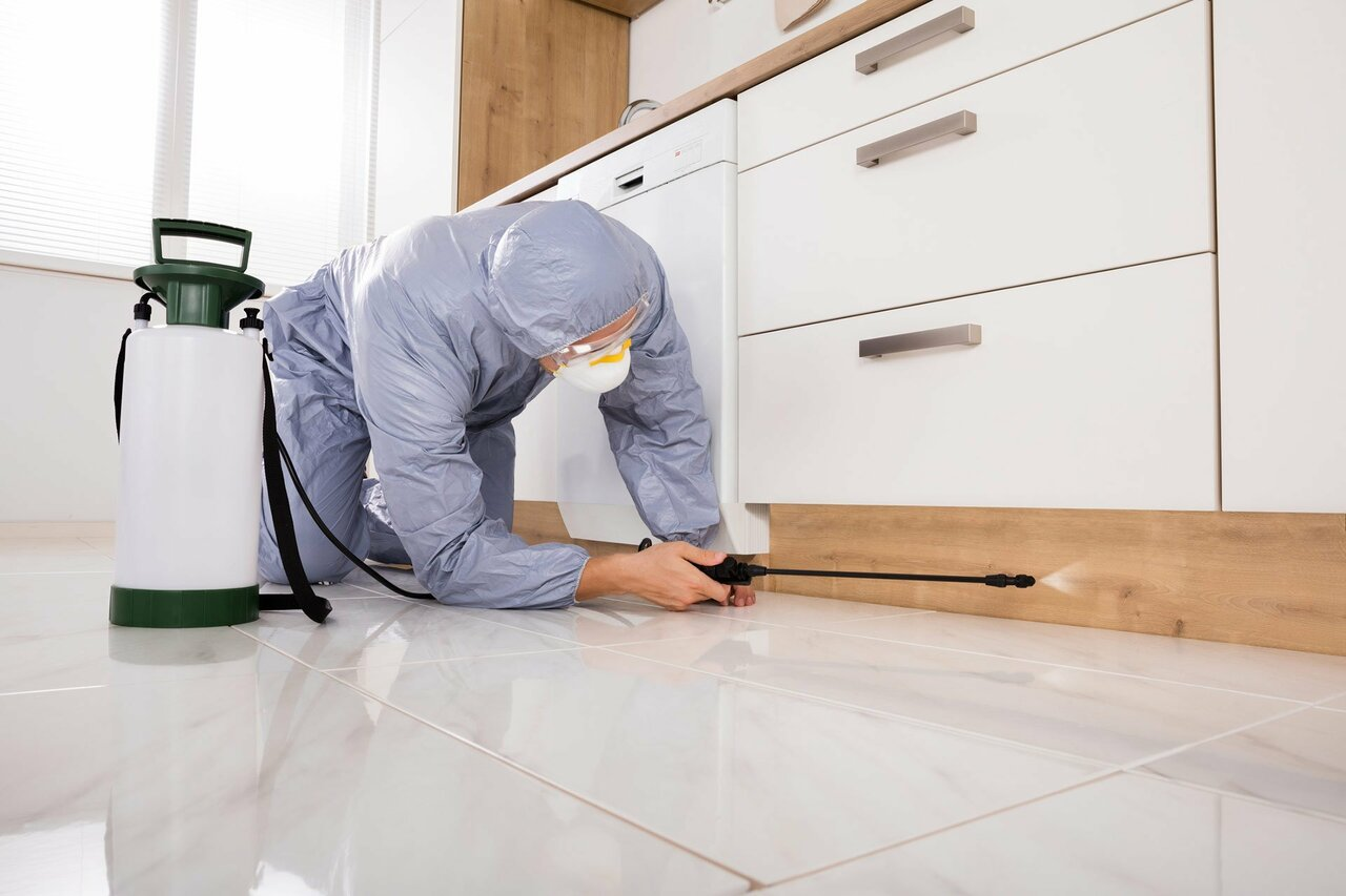 Pest Control Services Are Vital For a Healthy Business